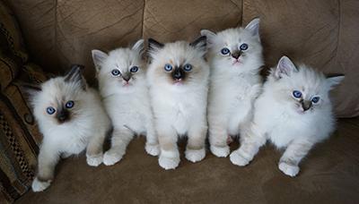 Faith kittens